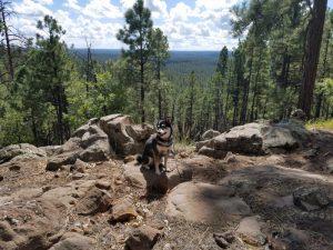 Kuma camps and hikes around Happy Jack, AZ